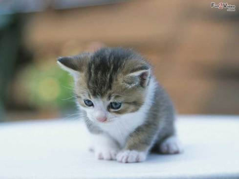cute-kitten-wallpaper
